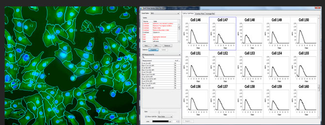 hiPSC cardiomyocyte Ca++ single cell transients